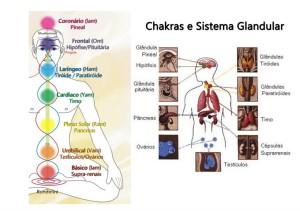 chakras-e-glândulas-endócrinas-copy2-1024x723